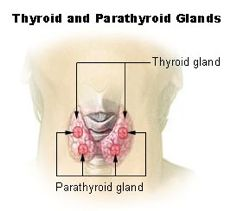 Post-Thyroid-Health