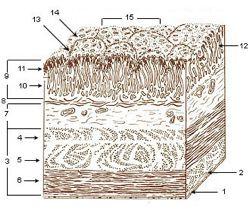 Post-Gut-Function-Intestinal-Mucosal-Barrier