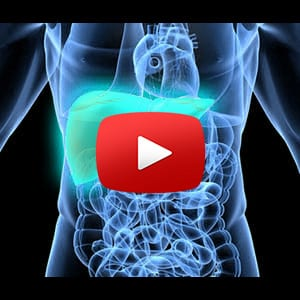 healing your gallbladder & supporting bile production - metabolic, Human body