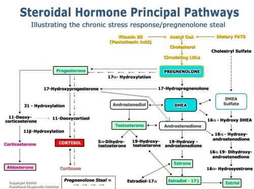 15285 additionally 2286 furthermore The Pituitary Gland And Hypothalamus together with 18555 in addition The Autonomic Nervous System. on endocrine hormone chart